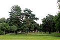 Лужайка в парке.JPG