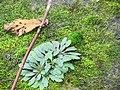 Мох и что-то. Камень на берегу. Татария. Октябрь 2012 - panoramio.jpg