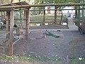 Мікрорайон Гречани, Хмельницький, Хмельницька область, Ukraine - panoramio (6).jpg
