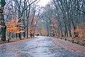 Національний дендрологічний парк «Софіївка19.jpg
