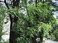 Парк шума Гази Баба во мај (20).JPG