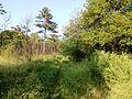 """Парк шума """"Гази Баба"""" 18.jpg"""