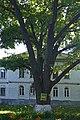 Полтава, Першотравневий проспект, 22. P1230806.jpg