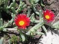 Растения в Седово 106.JPG