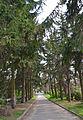 Сирецький дендропарк 39.jpg