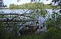 Смоленское Поозерье. Озеро Рытое.jpg