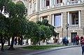 Софора японская плакучая в Одессе. Фото 2.jpg