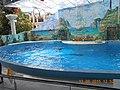 Сочинский дельфинарий парка «Ривьера». 19.jpg
