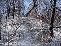Украина, Киев - Голосеевский лес 244.JPG