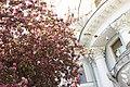 Цветущая яблоня. Елагин остров фото 1.jpg