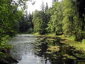 Pargolovo - Image: Шувалово. Пруд в парке (lake in Shuvalovsky Park, Saint Petersburg, Russia) 20100805
