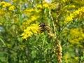Վայրի բնություն-1 133.jpg