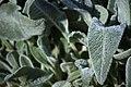 عکس از گلها و گیاهان باغ بوتانیکال تفلیس - گرجستان 32.jpg