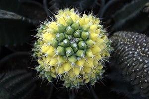گونه های کاکتوس در گلخانه دنیای خار در قم 39.jpg
