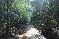 লাউয়াছড়া জাতীয় উদ্যান 14.jpg