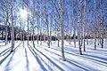 前田森林公園(Maeda forest park) - panoramio (20).jpg