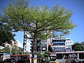 國父紀念館內公園景觀特寫 - panoramio - Tianmu peter.jpg