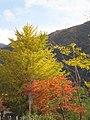 奥多摩湖の紅葉-03 - panoramio.jpg