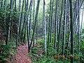 安徽省六安市霍山县山林景色 - panoramio.jpg