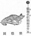 小熊猫圖.png
