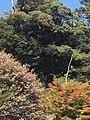 山王宮日吉神社3.jpg