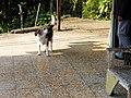 教堂的狗 the dog at the church - panoramio.jpg