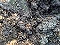 煤、原油等地(水)下可燃烧物的形成过程.jpg