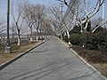 芒稻河东堤公园 - panoramio (1).jpg