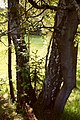 05-Baumgesellschaft.jpg