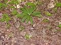 14.05.2006 - територія заказника Чернечий ліс (2).jpg