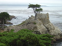 17-Mile Drive The Lone Cypress.JPG
