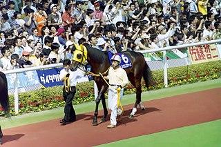 Neo Universe Japanese Thoroughbred racehorse