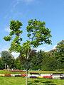 2007-09-16BadHomburgPark04.jpg