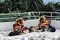 2010년 중앙119구조단 아이티 지진 국제출동100119 몬타나호텔 수색활동 (599).jpg