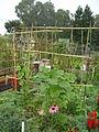 2010 Beresford Community Garden SanMateo CA 5018270265.jpg