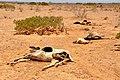 2011 Horn of Africa famine Oxfam 01.jpg