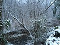 2016-01-17 16 52 42 A light wet snowfall on trees along the West Branch Shabakunk Creek in Ewing, New Jersey.jpg