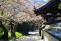 2016-04-11Houkouin,Nishiwaki 西脇市宝光院のパゴダと桜 DSCF8501.JPG