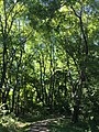 2016-07-02 10 20 13 A wooded walking trail in the Franklin Farm section of Oak Hill, Fairfax County, Virginia.jpg