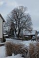 2017-01-16 Gerichtslinde Erdmannrode (Hessen) 03.jpg