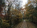 2017-11-07 14 49 40 View along a walking path during late autumn in the Franklin Farm section of Oak Hill, Fairfax County, Virginia.jpg