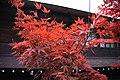 20171030 Shiragawa 2415 (39131011421).jpg