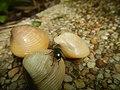 4087Ants Common houseflies foods delicacies of Bulacan 56.jpg