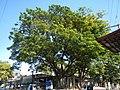 6592San Jose del Monte City Bagong Buhay Hall Chapelfvf 36.JPG