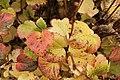 75.DullesCorner.HerndonVA.28October2012 (8138451963).jpg