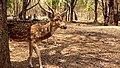 A Deer.jpg