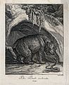A bear and a snake hissing at each other outside a cave. Etc Wellcome V0021063ER.jpg