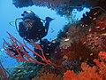 A diver in Raja Ampat seascape.jpg