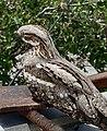 A persian bird.jpg