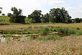 A pond below the M11 embankment in the Woodland Trust wood Theydon Bois Essex England.JPG